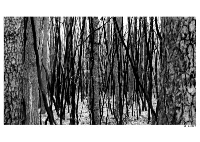2007_01_11_Cerne linie