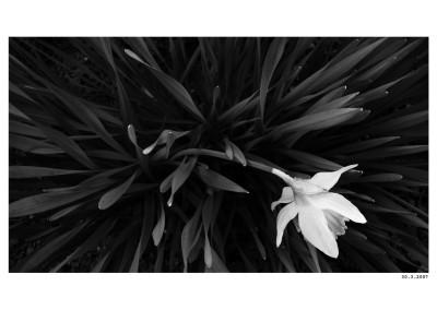 2007_03_30_Narcis