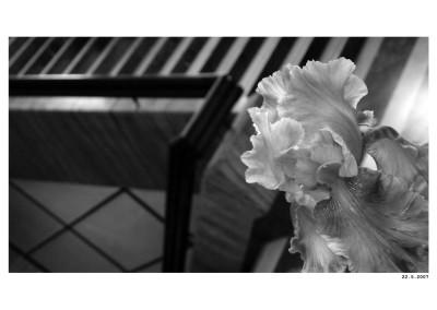 2007_05_22_Kosatce
