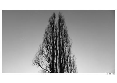 2011_12_20_Strom