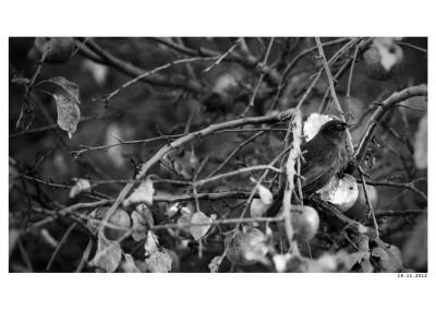 2012_11_19_Snidane