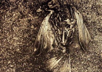 Josef Sudek - Relief vrabce, 1946